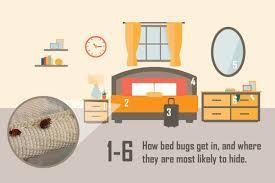 Will Heat Kill Bed Bugs Bed Bug Control U0026 Prevention Plunkett U0027s Pest Control