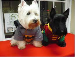 Funny Halloween Animal Costumes Halloween Costumes Favorites Halloween Costumes