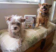 The Honest Kitchen Reviews by Review The Honest Kitchen Dog Food The Chesnut Mutts
