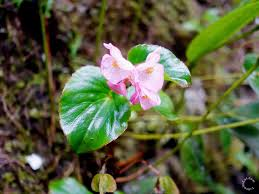japanese native plants flowers of machu picchu peru travel to eat