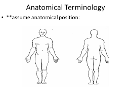 Human Anatomy Terminology Sehs Topic 1 Anatomy Ppt Video Online Download