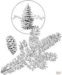 cedar tree coloring page kids drawing and coloring pages marisa