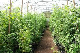Garden Of Ideas Ridgefield Ct Garden Of Ideas Localharvest
