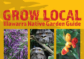 native screening plants fast growing grow local illawarra native garden guide by wollongong city