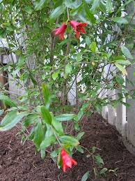 16 edible plants that are thriving in our front yard garden and 3