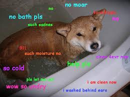 Wet Meme - much wet imgur