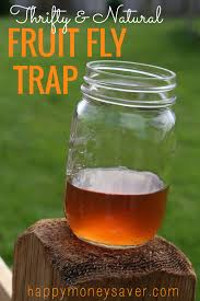 How To Get Rid Of Flies In The Backyard the best fruit fly trap using vinegar and dish soap they must die