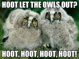 Funny Owl Meme - owl meme owl meme i forgot to upload most in demand project on