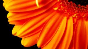 wallpaper hd orange in gallery robert downey jr wallpapers 48 robert downey jr hd