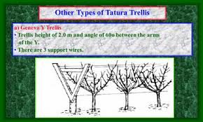 recent trends in training methods of deciduous fruit trees ppt
