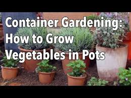 container gardening vegetables as balcony plants upcycle u0026 co