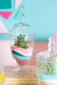 diy succulent sand art terrariums design improvised