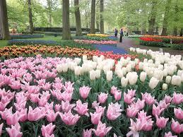 ten great flower gardens to visit now beautifulnow