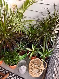 tropical plants lanterns candles balcony balcony decor and