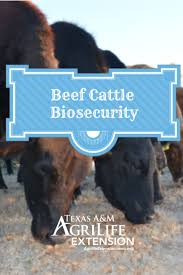 201 best ag and ffa images on pinterest ag science animal