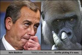 Nose Meme - gorilla picking it s nose totally looks like separated at