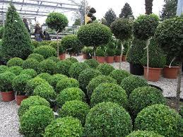 pflanzen fã r den balkon mediterrane pflanzen fr balkon möbel ideen und home design