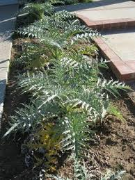 how to grow a winter vegetable garden in southern california the