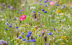 a simple guide to the wildflowers of britain country life