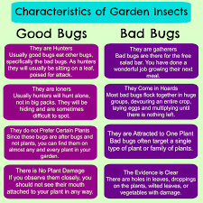 Good Garden Vegetables by Greneaux Gardens Garden Insects Good Guys Or Bad Guys