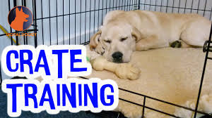 crate training dog crate training dos and donts youtube