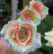 Multi Colored Roses Multi Coloured Roses Flowers U0026 Plants Pinterest Flowers
