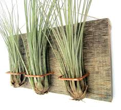 home interiors candles meet your modern indoor plants air plant wall display home interiors