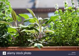 Window Box For Herbs Herbs Window Box Stock Photos U0026 Herbs Window Box Stock Images Alamy