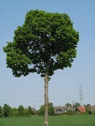 free tree texture photo gallery tonytextures