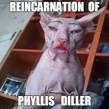 Hairless Cat Meme - hairless cat in make up memes imgflip