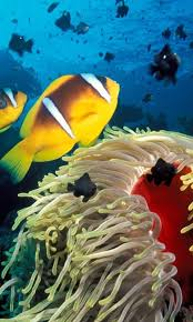 wallpaper hp yang bergerak aquarium live wallpapers 1mobile com