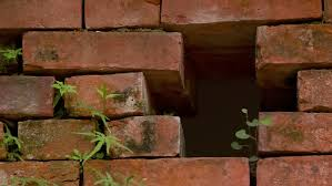 the brick wall and plant leaves stock footage 26504093