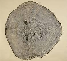 woodcut prints showcase the of tree rings deeproot