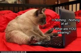 cat chat lolcats lol cat memes funny cats funny cat