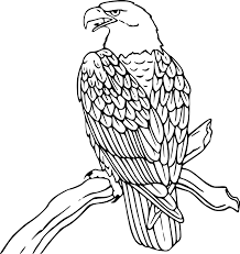 drawn white tailed eagle flag clip art pencil and in color drawn