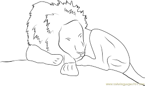 lion sleeping coloring free lion coloring pages