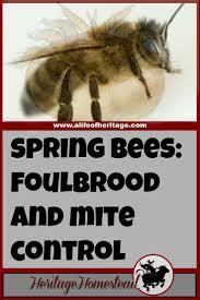 877 best bee keeping images on pinterest bee keeping raising