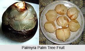 Palm Trees Fruit - palm tree indian tree