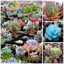 compare prices on lotus flowers for sale online shopping buy low