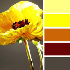 yellow color schemes brown and yellow color scheme 7 fresh color schemes for your theme
