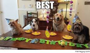 Birthday Dog Meme - dog birthday party meme guy