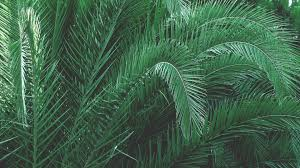 free images branch palm tree leaf green jungle botany