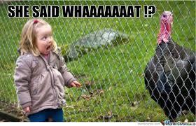 Gossip Meme - the gossip turkey by louu meme center