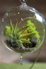houseplants that need little light house plants that need little light loris decoration