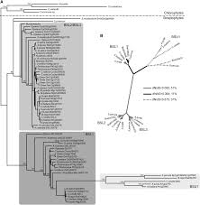 revisiting the evolutionary history and roles of protein