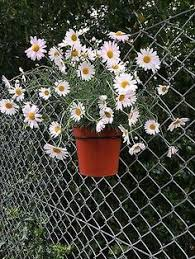 Flower Pot Holders For Fence - planter window box hung on chain link fence shelf is made from a
