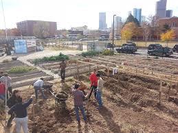 Urban Garden Denver - urban farming volunteer day putting the s park farm to