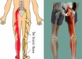 Nerves In The Knee Anatomy Knee And Leg Platinum Physiotherapy