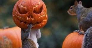 baby blogging boomer the squirrel that took halloween a little