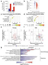 dietary restriction protects from age associated dna methylation
